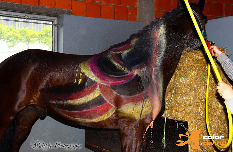 HORSE PAINTING by Marlies Brinker, Rheine NRW, Bodypainting mit Fotoshooting www.color-diving.com