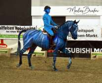 Horse painting, Avatar, blau, Pferd anmalen, blau, K+K Cup, Münster, Marlies Brinker, Bodypainting, Pferd anmalen, NRW, Equitana, Aachen, Köln, Veranstaltung, Show reiten,