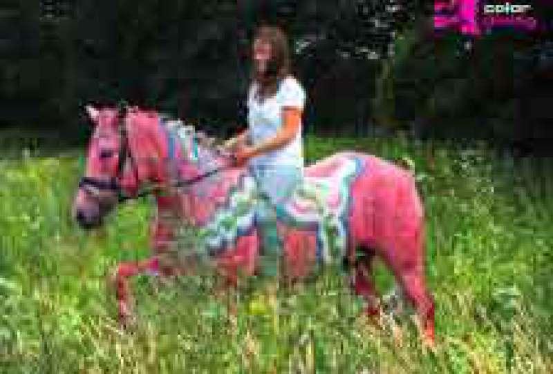 Horse, Painting, Pferd, anmalen, Fotoshooting, Dala, Pferd, rosa, Ideen, Pferd, anmalen, Kunstwerk,